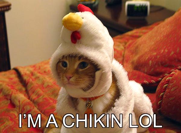 Cat_chikin